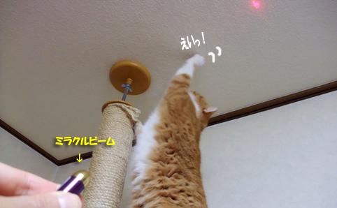 mirakuruのコピー