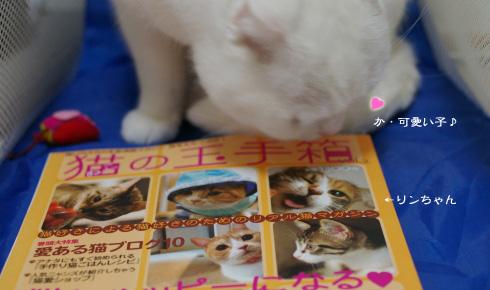 kawaiiコピー
