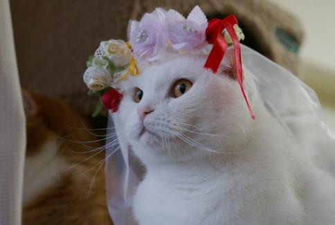 僕が変わりに花嫁