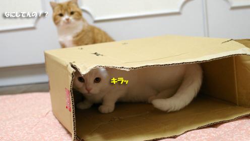 箱に入るピー