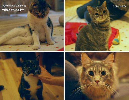 猫カフェ定 1