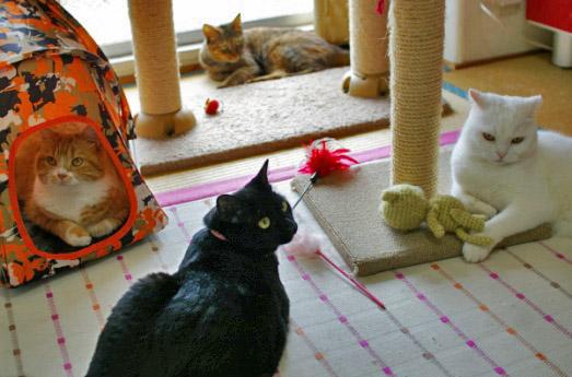 4猫ショット6