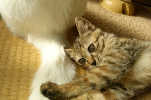 タマと子猫時代のキララ