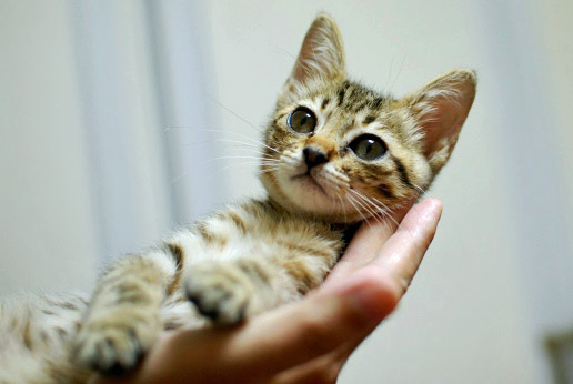 抱っこも好きチョコちゃん