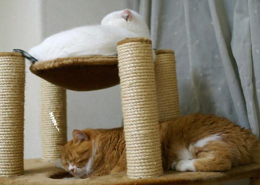 猫部屋のハンモックのコピー