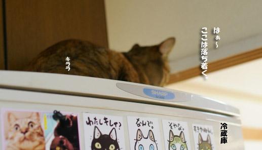 キララは冷蔵庫の↑のコピー
