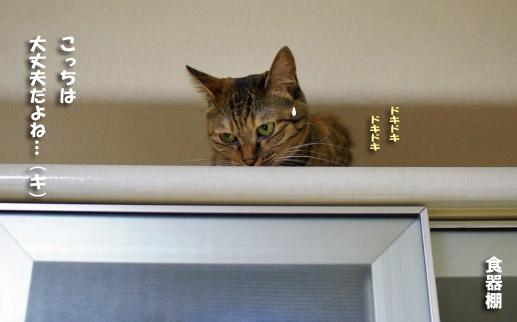 キララ食器棚の上でドキドキー