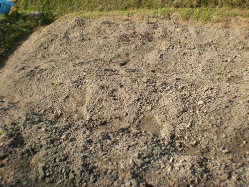 田んぼの土質2