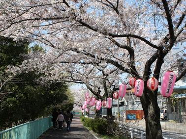 ueda_sakura2011 482