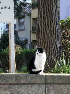 天保山の猫