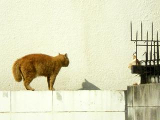 塀の上の猫1