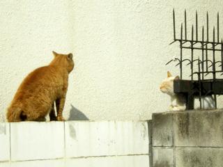 塀の上の猫2