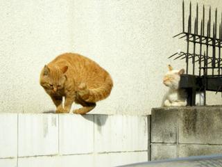 塀の上の猫3