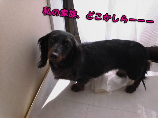 choco_20100222213757.jpg