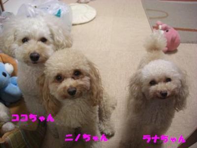3姉妹ココ&ニノ&ラナ