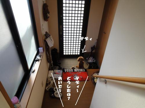 DSC00423_20101126111910.jpg