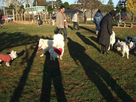 画像 138 白犬いっぱい