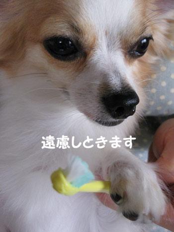 2009.07.06②