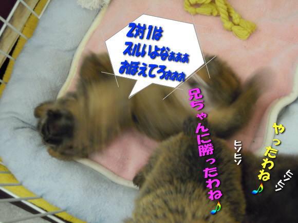 2010 01 10 009-osu