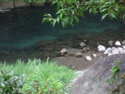 岩蔵の渓流