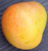 Mango R2E2