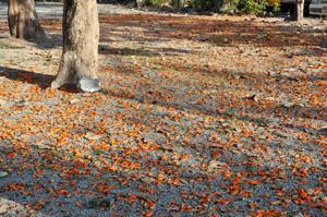 オレンジ色の道