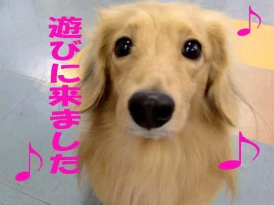 005_20091027174156.jpg