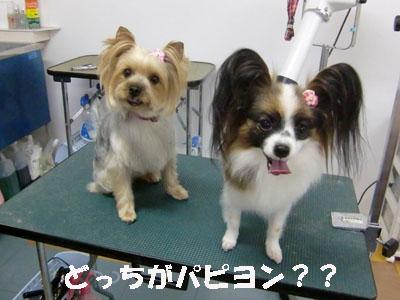 チェルシーちゃん&モカちゃん