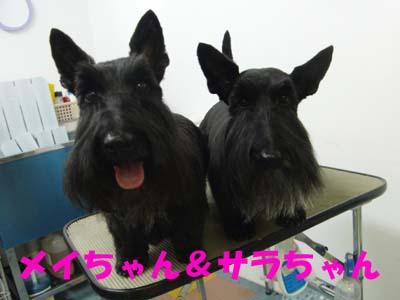 メイちゃん&サラちゃん