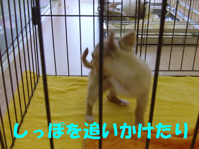 2_20091227170117.jpg