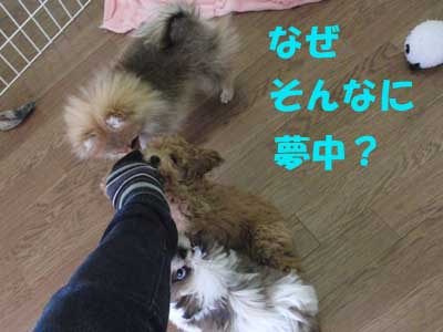 4_20100423133012.jpg