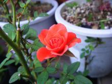 DSCF5125_convert_20090919225058.jpg