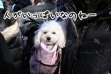 10102_20100102182445.jpg