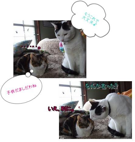 ニャース麻呂3