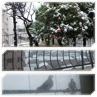 3月の雪景色