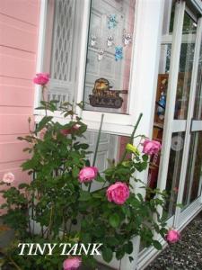 10月11日バラ満開
