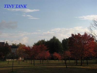 10月17日空、紅葉