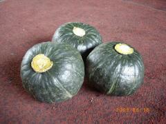 2009_0618かぼちゃ0028