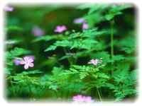flowerpicture2.jpg