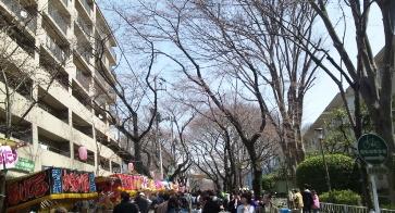 さくら祭り2012-1