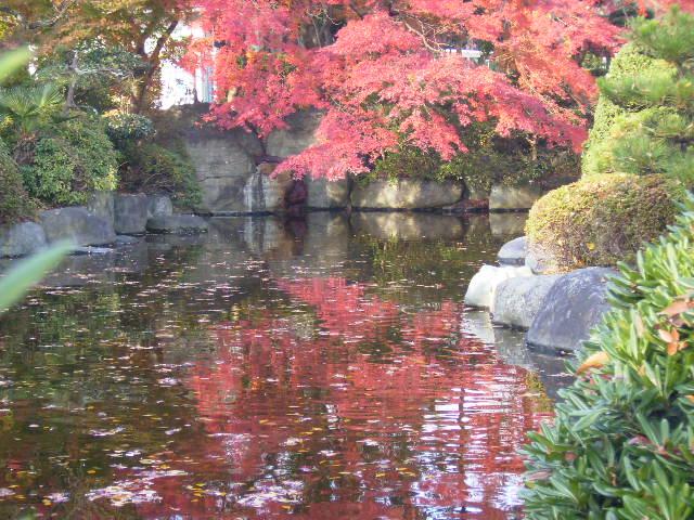 水面の紅葉09
