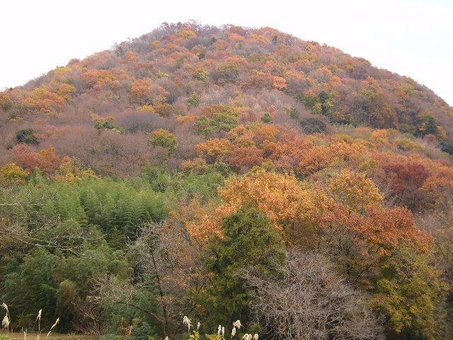 山の黄葉25