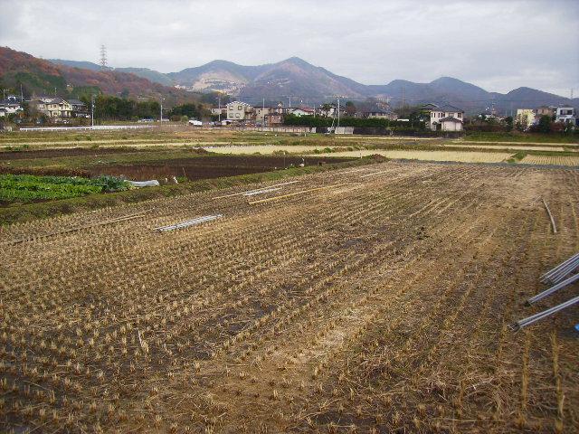 初冬の田んぼ46