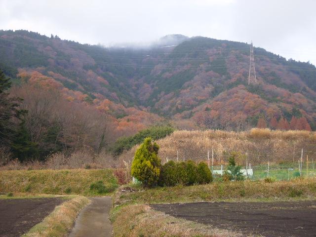 山の黄葉50