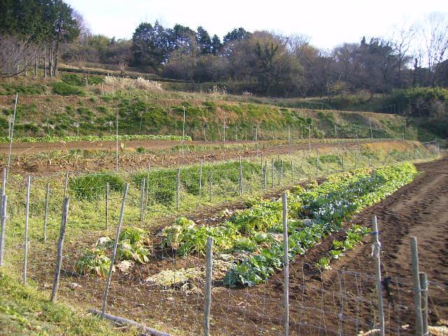 野菜畑47