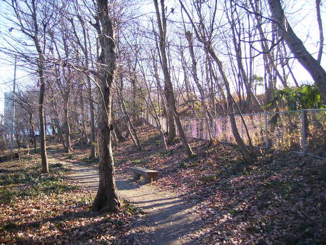 冬木と遊歩道09