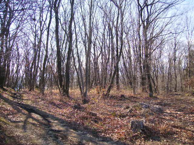 冬の森40