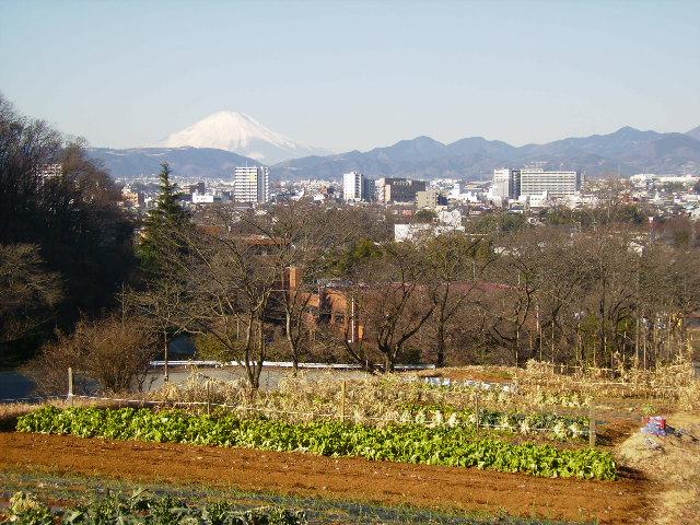 白富士と野菜畑64