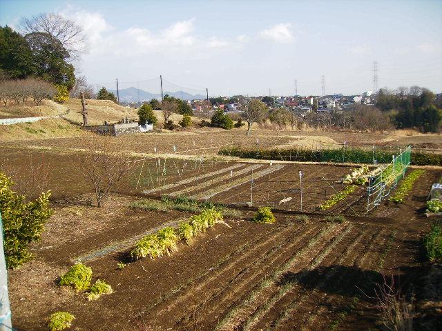 冬の畑09