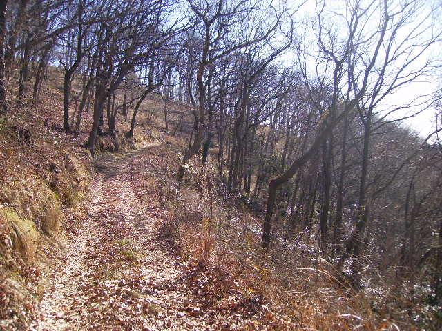 冬木の遊歩道105